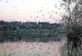 lac-reghaia2